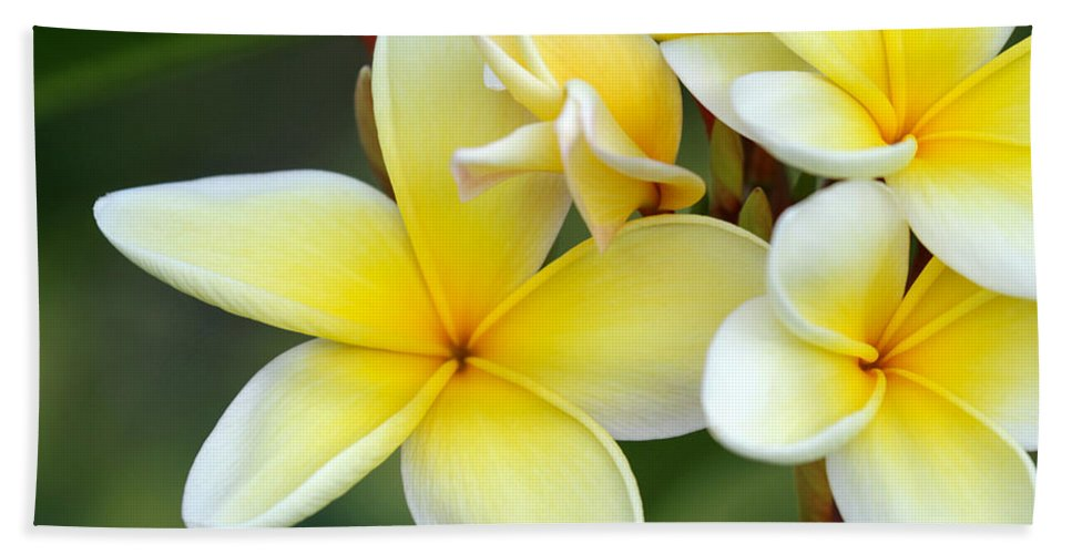 Macro Hand Towel featuring the photograph Yellow Frangipani Flowers by Sabrina L Ryan