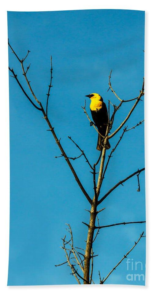 Bird Hand Towel featuring the photograph Yellow-headed Blackbird by Robert Bales