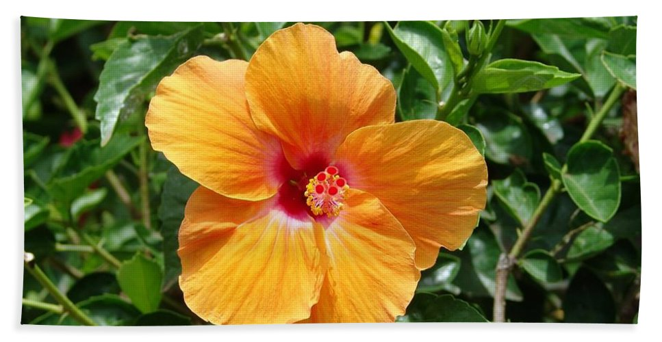 Yellow Hibiscus Hand Towel featuring the photograph Yellow Hibiscus by Eric Swan