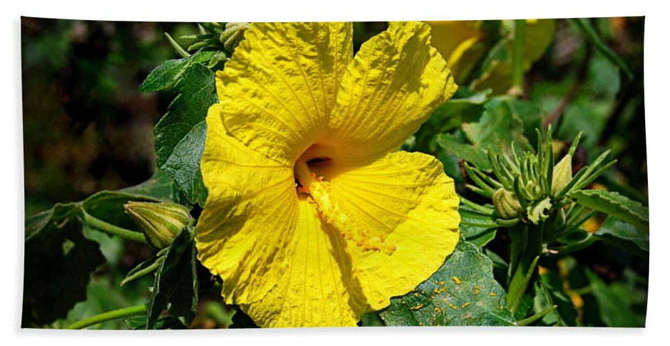 Hawaii State Flower Bath Sheet featuring the photograph Yellow Hibiscus Hawaii State Flower by Catherine Sherman