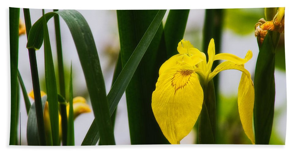 Europe Hand Towel featuring the photograph Yellow Iris by Roberto Pagani