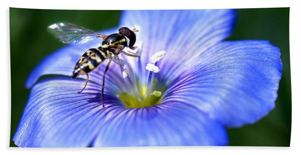 Blue Flax Flower Bath Sheet featuring the photograph Blue Flax Flower by Iris Richardson