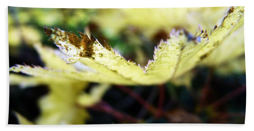 Yellow Bath Sheet featuring the photograph Yellow Japanese Maple by Anna Burdette
