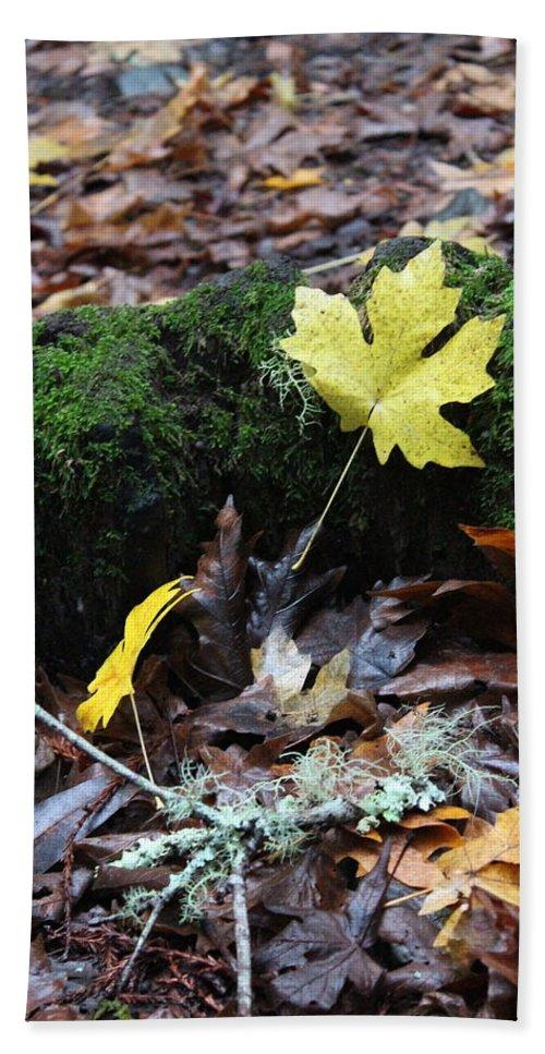 California Bath Sheet featuring the photograph Yellow Leaf by Nicholas Miller