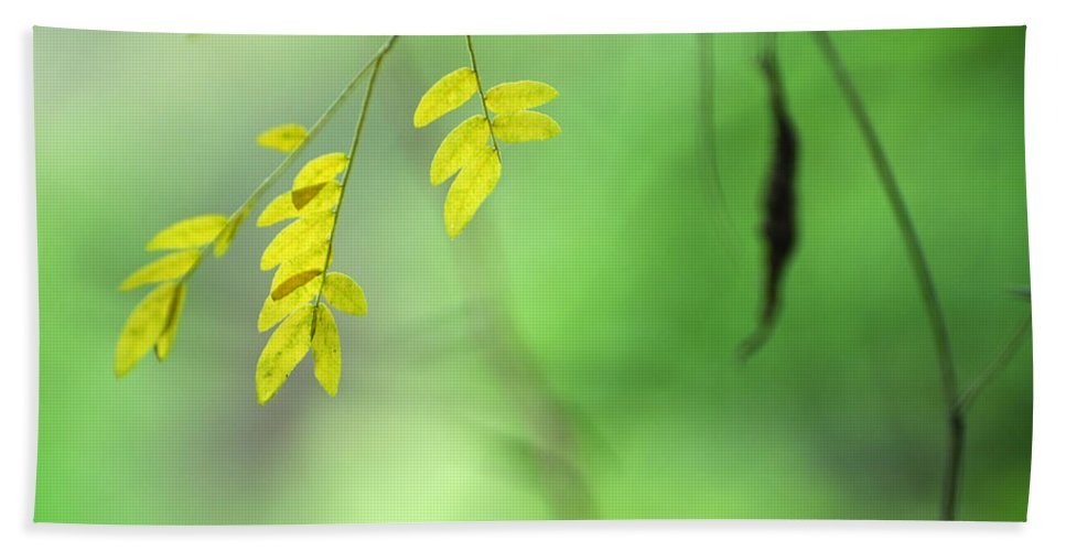 Bath Sheet featuring the photograph Yellow Leaves by Guido Montanes Castillo