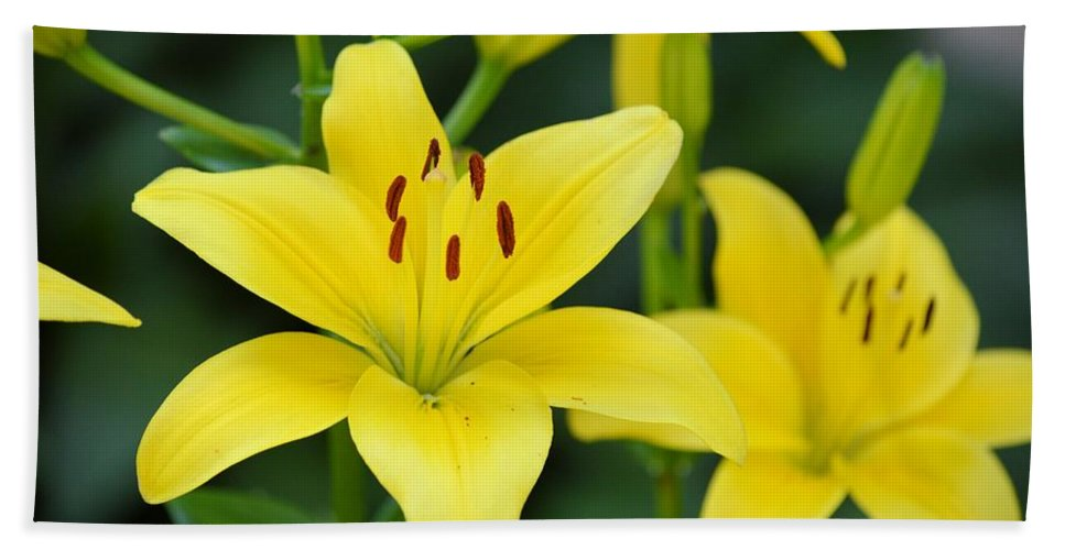 Flower Bath Sheet featuring the photograph Yellow Lilly 8107 by Bonfire Photography