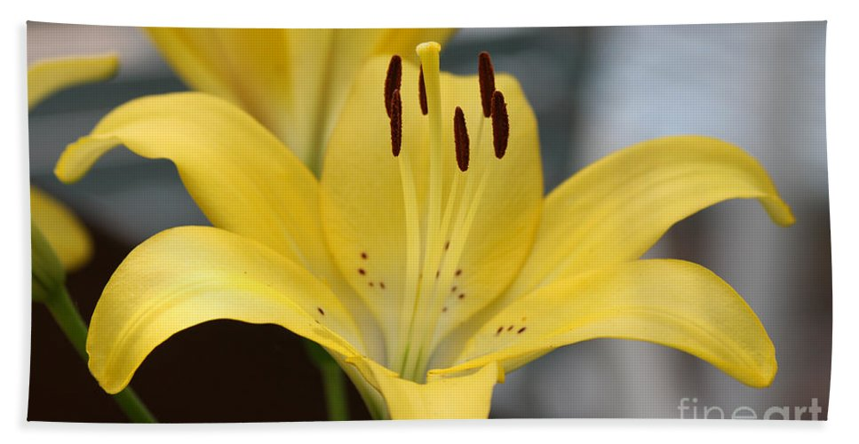 Yellow Bath Sheet featuring the photograph Yellow Lilly by Lori Tordsen
