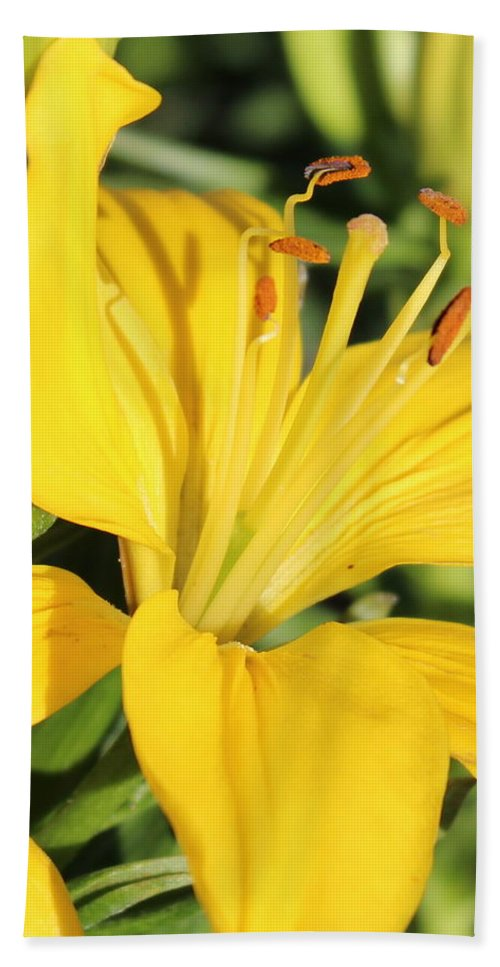 Yellow Lily Bath Sheet featuring the photograph Yellow Lily by Kume Bryant