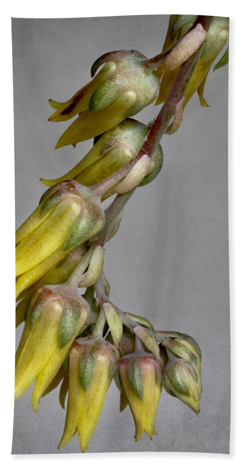 Cactus Bath Sheet featuring the photograph Yellow On Gray by David and Carol Kelly