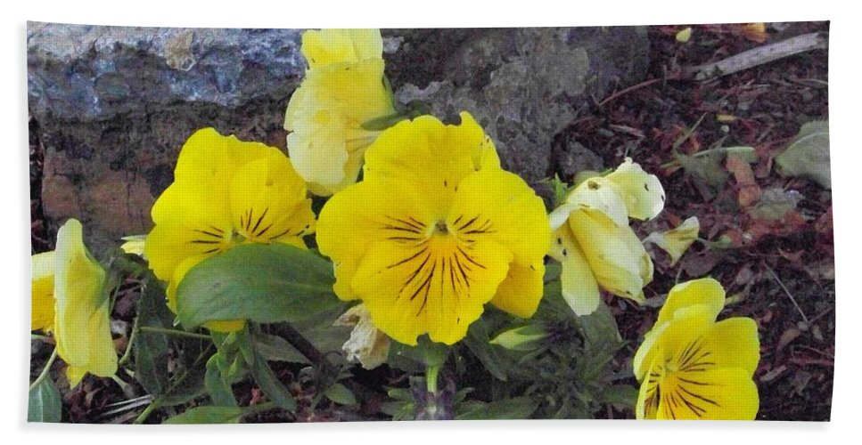 Flowers Hand Towel featuring the photograph Yellow Pansies by Charles Robinson