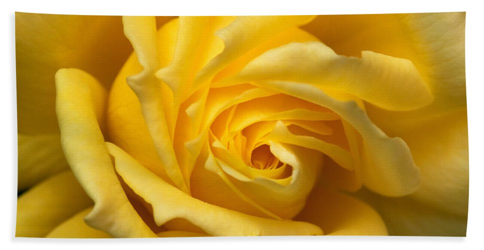 Barbara Meloni Hand Towel featuring the photograph Yellow Rose by Barbara Alessandra Meloni