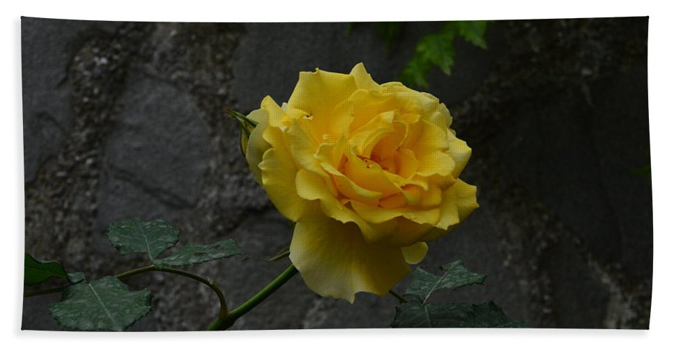 Rose Bath Sheet featuring the photograph Yellow Rose by Dany Lison