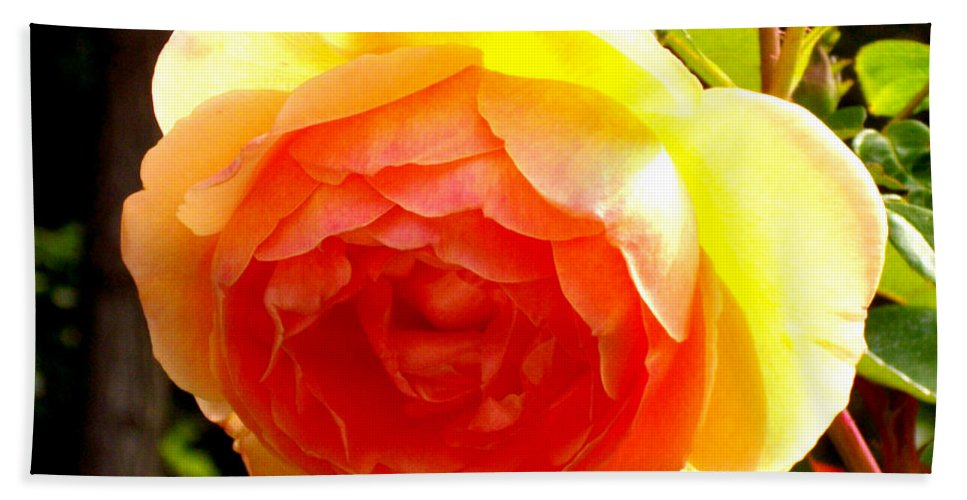 Rose Hand Towel featuring the photograph Yellow Rose by H Cooper