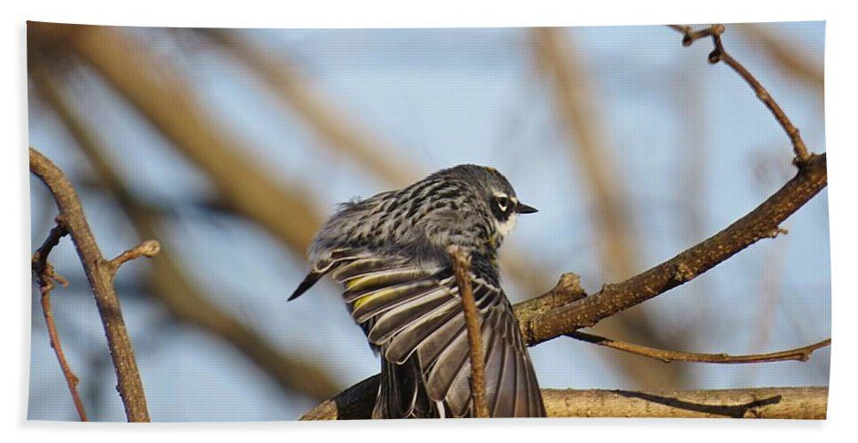 Male Yellow-rumped Myrtle Warbler Hand Towel featuring the photograph Yellow-rumped Warbler by MTBobbins Photography