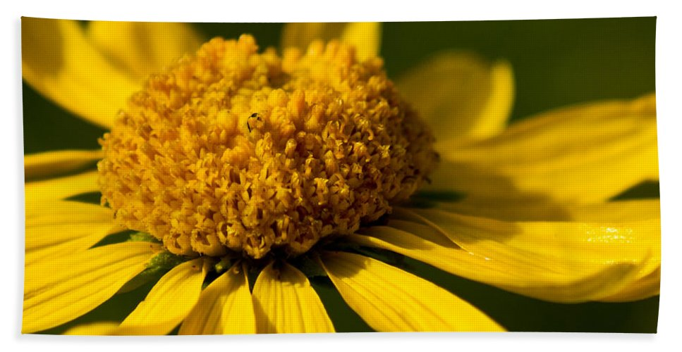 Flower Bath Sheet featuring the photograph Yellow Saucer by Patrick Moore