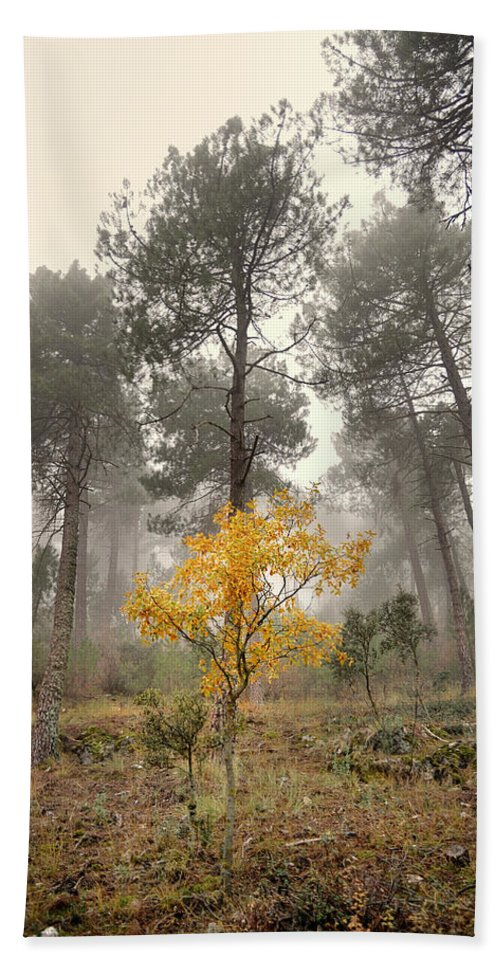 Retro Hand Towel featuring the photograph Yellow Tree In The Foggy Forest by Guido Montanes Castillo