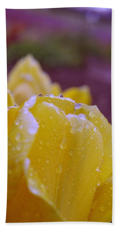 Flowers Hand Towel featuring the photograph Yellow Tulip Dappled With Rain by Jeff Swan