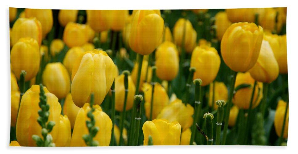 Tulip Bath Sheet featuring the photograph Yellow Tulip Sea by Jennifer Ancker