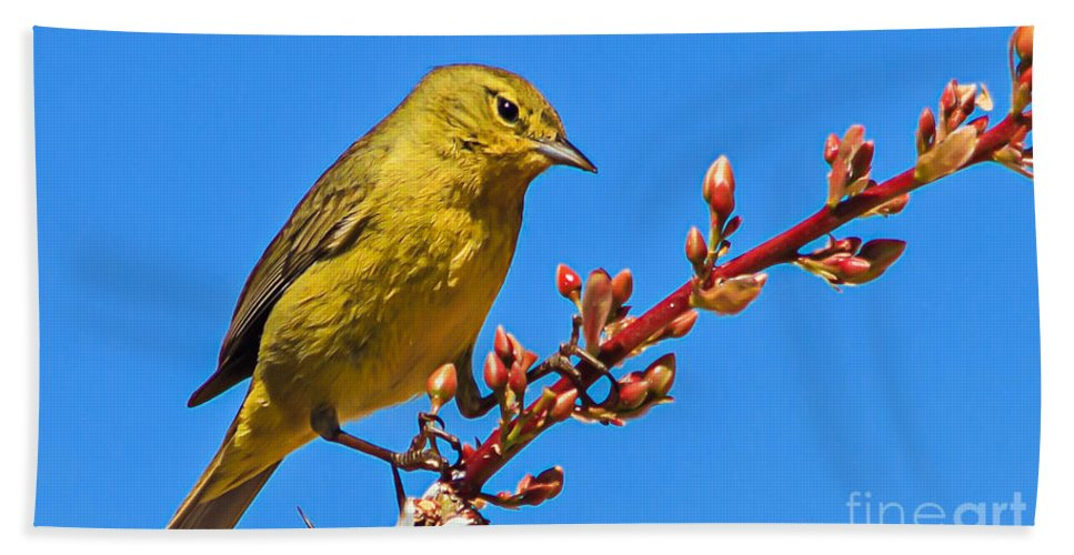 Birds Bath Sheet featuring the photograph Yellow Warbler by Robert Bales