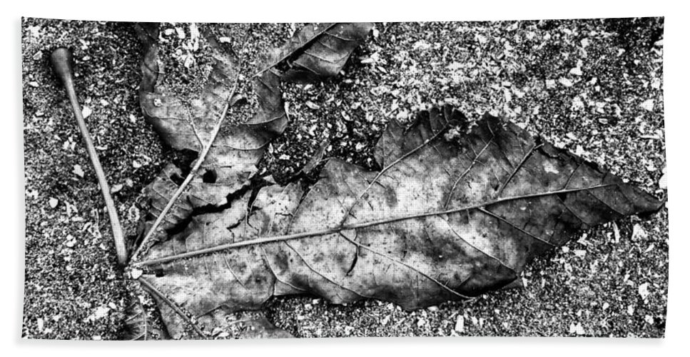 Leaf Bath Sheet featuring the photograph Yesterdays by The Artist Project