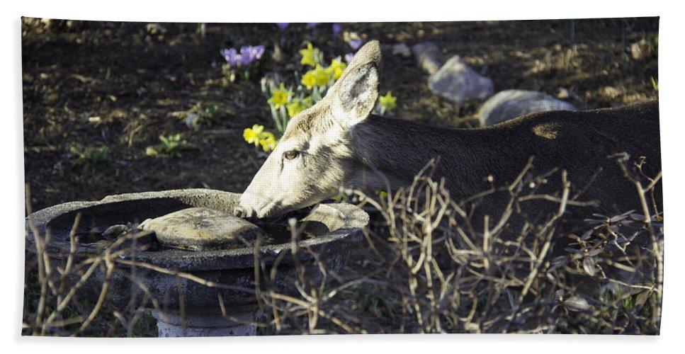 Deer Bath Sheet featuring the photograph You Are Not A Bird by Teresa Mucha
