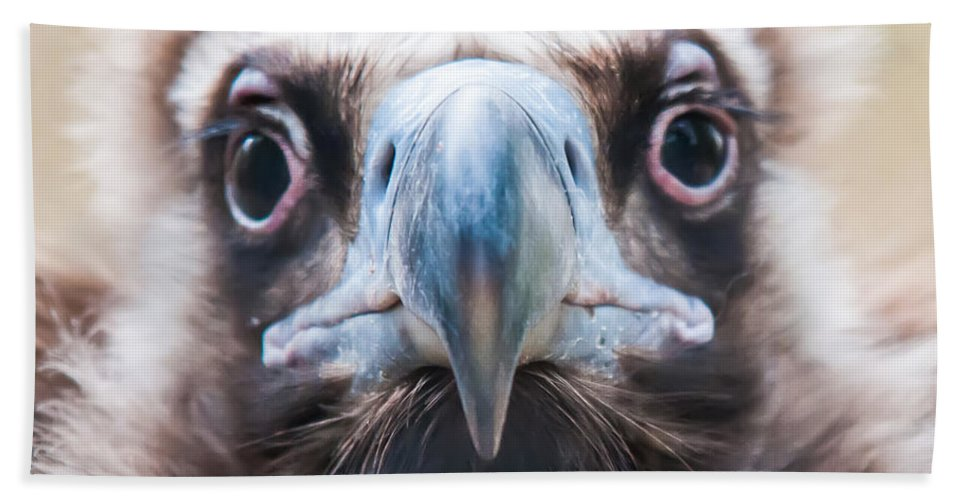 Young Hand Towel featuring the photograph Young Baby Vulture Raptor Bird by Alex Grichenko