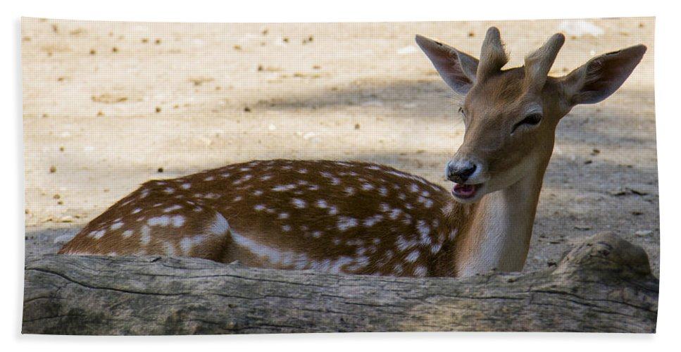 Young Deer Bath Sheet featuring the photograph Young Deer by Sotiris Filippou