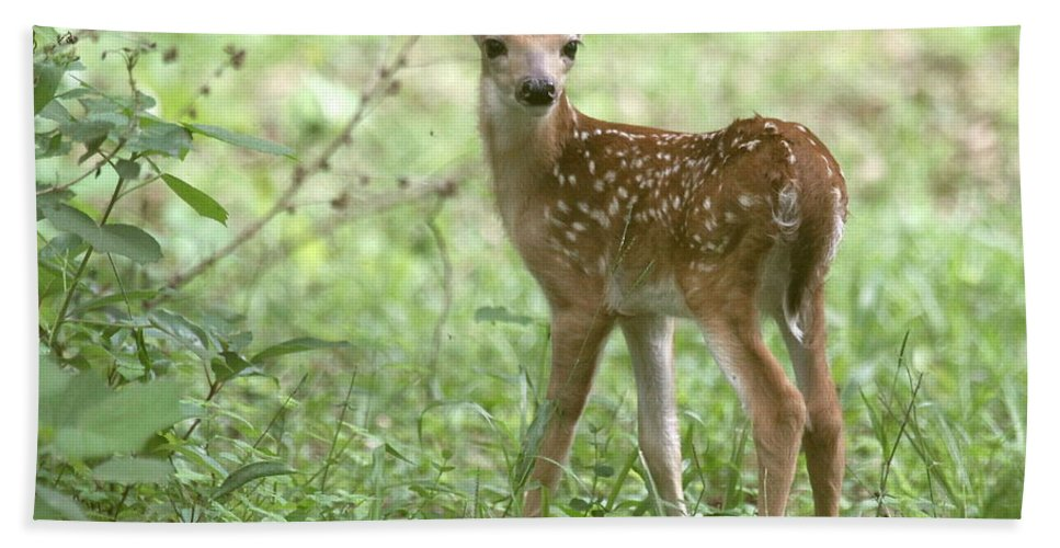 Deer Hand Towel featuring the photograph Young Fawn In The Woods by Myrna Bradshaw