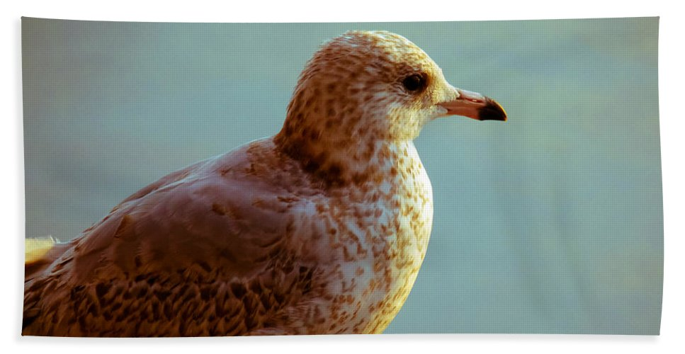 Seagull Bath Sheet featuring the photograph Young Gull by Anna Burdette