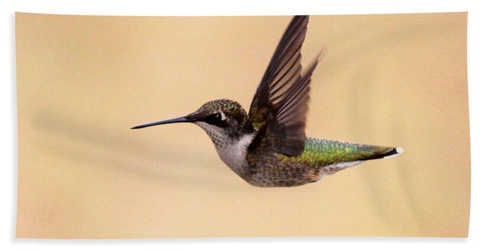 Hummingbird Bath Sheet featuring the photograph Young Hummingbird - Sailor by Travis Truelove