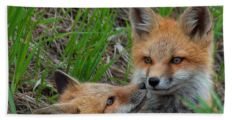 Fox Hand Towel featuring the photograph Young Love by Jim Garrison
