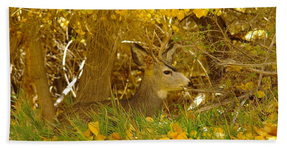 Bath Sheet featuring the photograph Young Male Buck by Jeff Swan