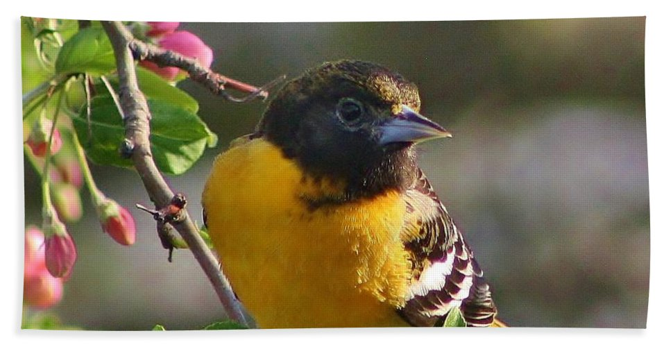Oriole Bath Sheet featuring the photograph Young Male Oriole by Bruce Bley