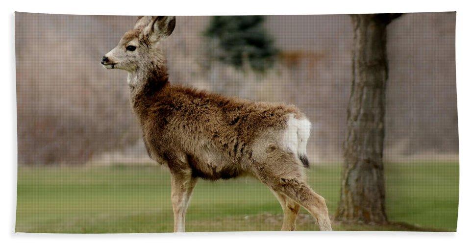 Big Ears Bath Sheet featuring the photograph Young Mule Deer by Ernie Echols