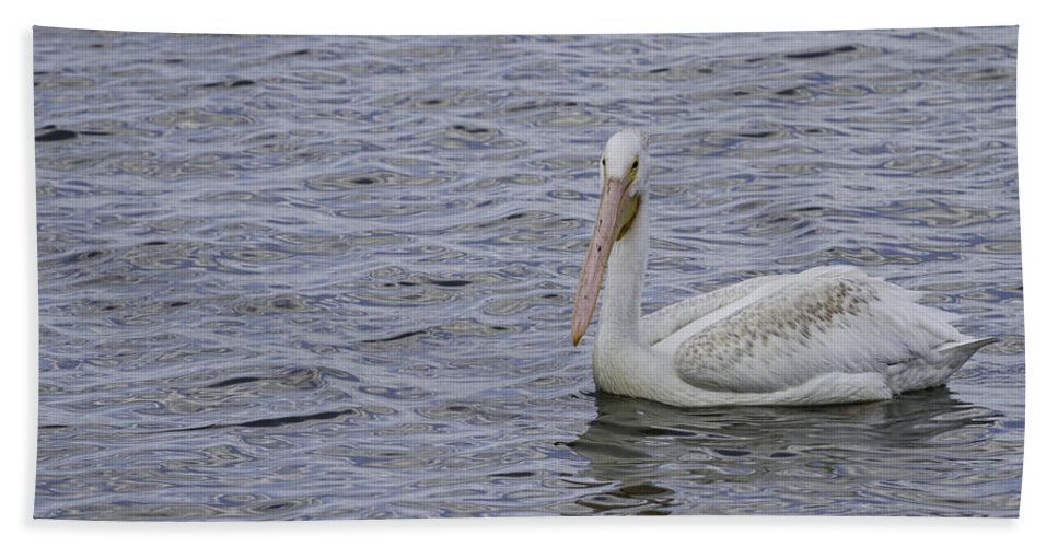 White Pelican Hand Towel featuring the photograph Young Pelican by Thomas Young