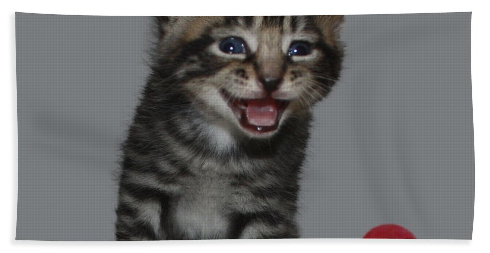 Funny Kitten Hand Towel featuring the photograph You're Funny by Terri Waters