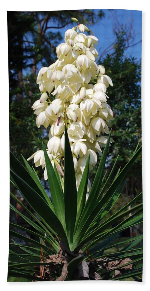 Full Bloom Hand Towel featuring the photograph Yucca by Robert Floyd
