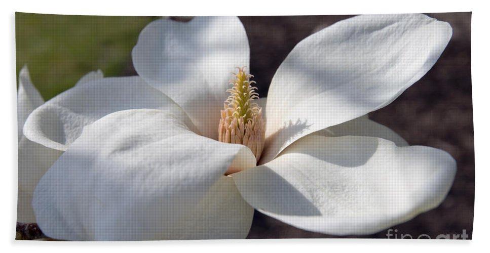 White Magnolia Macro Bath Sheet featuring the photograph Yulan Magnolia 4591 by Terri Winkler