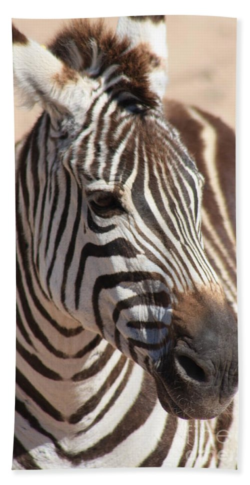 Zebra Hand Towel featuring the photograph Zebra by Brandi Maher