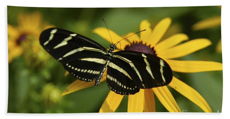 Butterfly Bath Sheet featuring the photograph Zebra Butterfly by Anthony Sacco