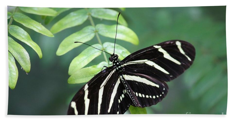 Butterfly Hand Towel featuring the photograph Zebra Butterfly by Carol Groenen