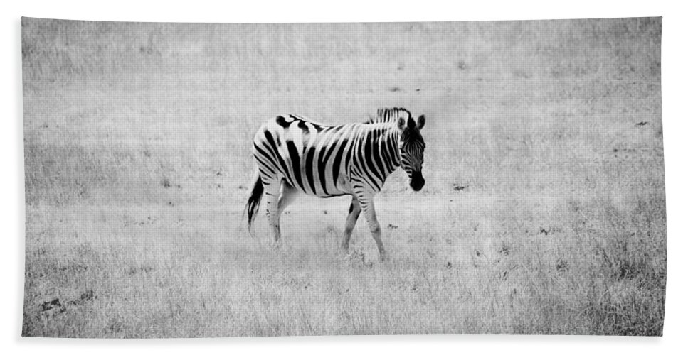 Zebra Hand Towel featuring the photograph Zebra Explorer by Melanie Lankford Photography