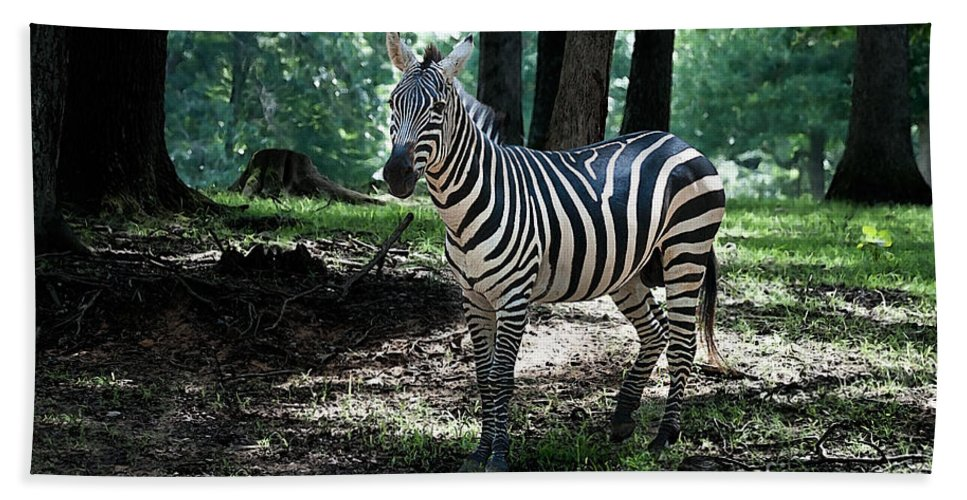 Zebra Bath Sheet featuring the photograph Zebra Forest 2 by Photos By Cassandra