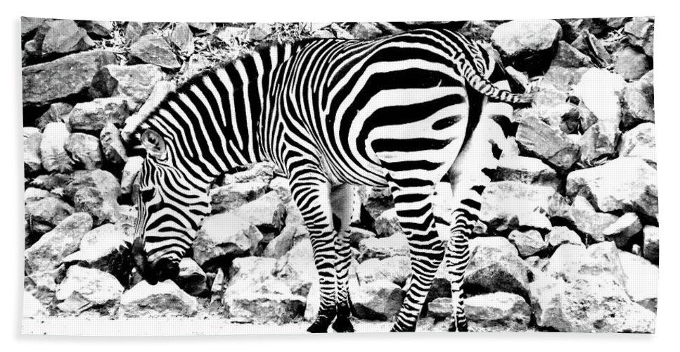 Zebra Bath Sheet featuring the photograph Zebra by Lizi Beard-Ward