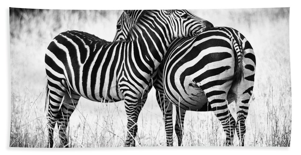 3scape Hand Towel featuring the photograph Zebra Love by Adam Romanowicz