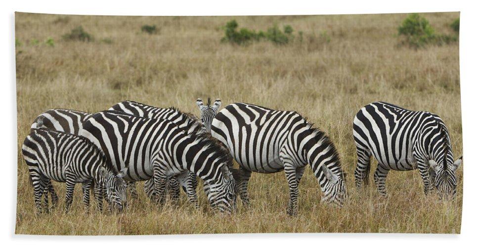 Africa Bath Sheet featuring the photograph Zebra On Masai Mara Plains by John Shaw
