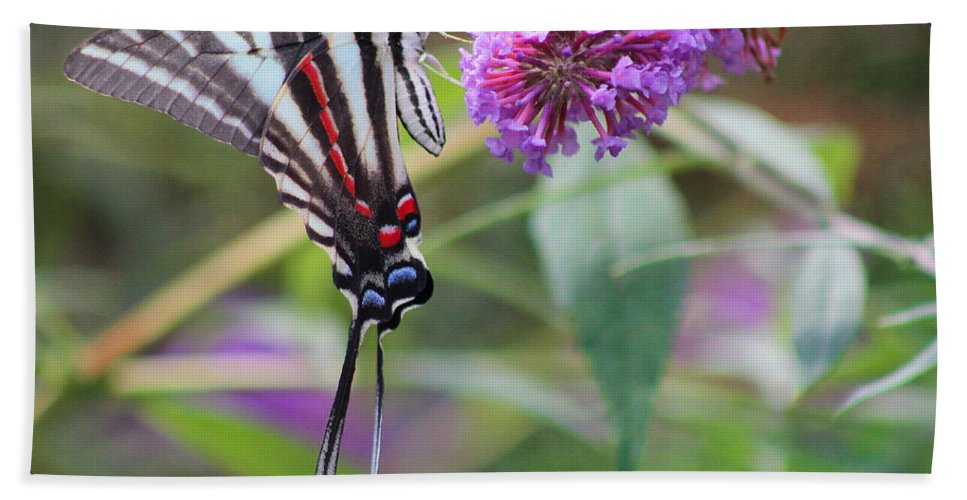 Zebra Hand Towel featuring the photograph Zebra Swallowtail Butterfly On Butterfly Bush by Karen Adams