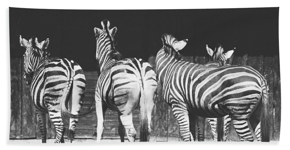 Black And White Bath Sheet featuring the photograph Zebras From Behind by Pati Photography