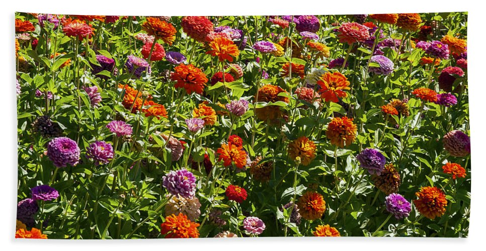 Napa Valley California Flower Flowers Plant Plants Garden Gardens Zinnia Zinnias Hand Towel featuring the photograph Zinna Variety by Bob Phillips