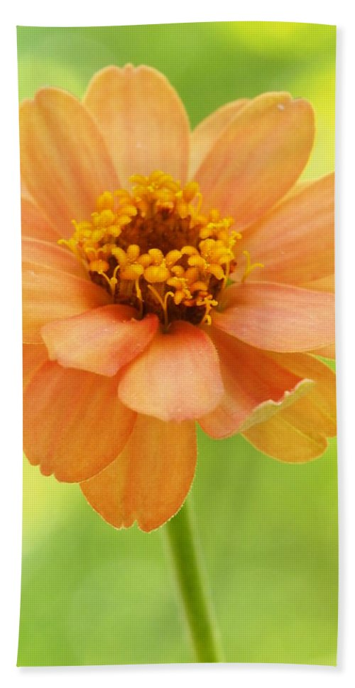 Flowers Bath Sheet featuring the photograph Zinnia On A Brilliant Spring Day by Dorothy Lee